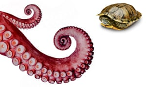 An octopus will reach out, a turtle is inclined to retreat.