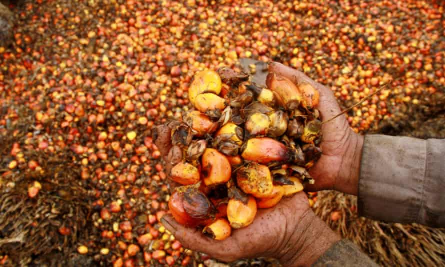 A worker with palm oil fruits at a plantation in Mamuju, Indonesia