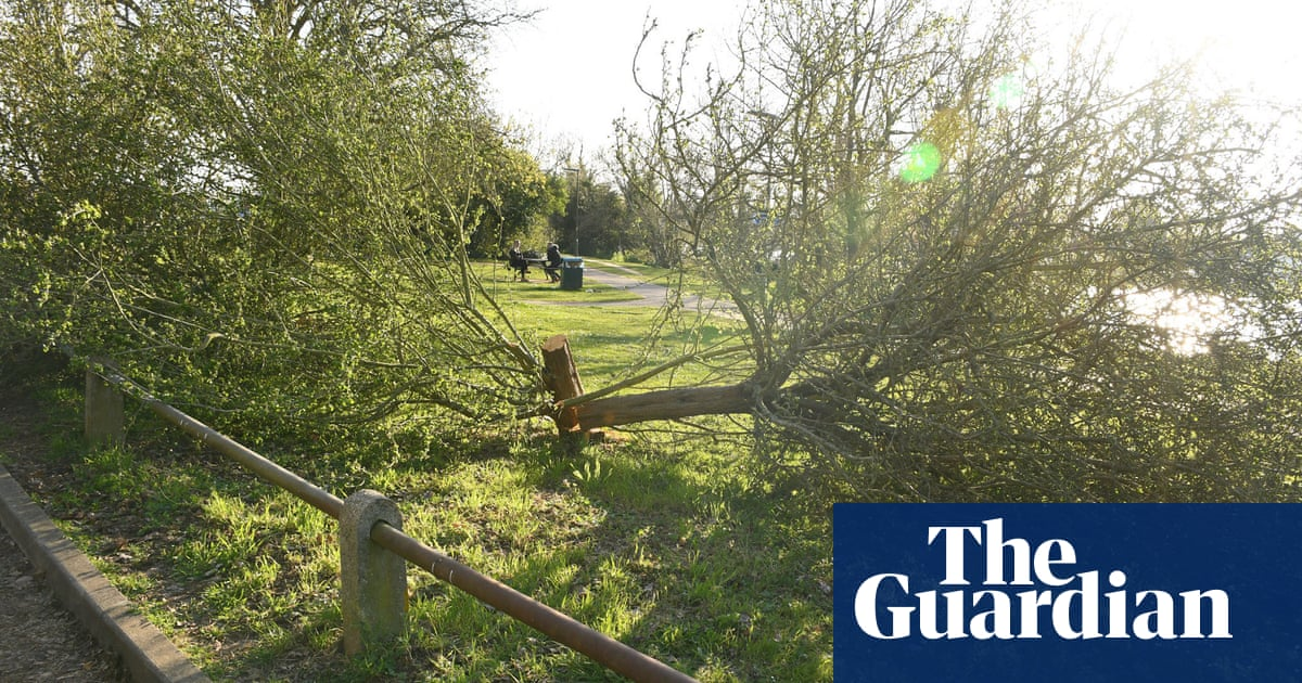 Surrey tree cutter: residents horrified by 'mindless vandalism'