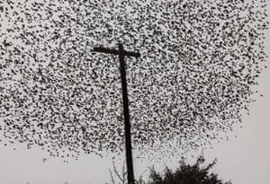 Graciela Iturbide – Pájaros en el poste.