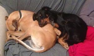 Milton (left) and Pippa sleeping.