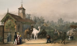 The camel enclosure at Regent's Park Zoological Gardens in 1835.