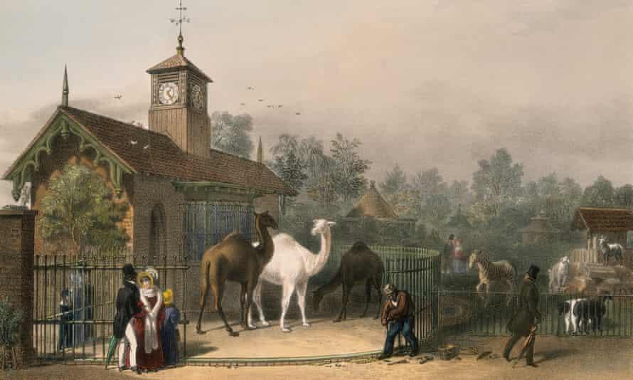 The camel enclosure at Regent's Park Zoological Gardens in 1835.