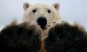 The rising Arctic temperatures that threaten polar bears could be sending wintry weather our way.