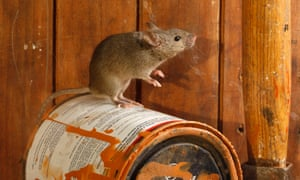 A mouse in the house need not necessitate a call to pest control.