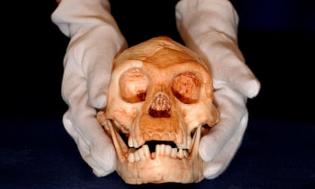 'Hobbit' species did not evolve from ancestor of modern humans, research finds