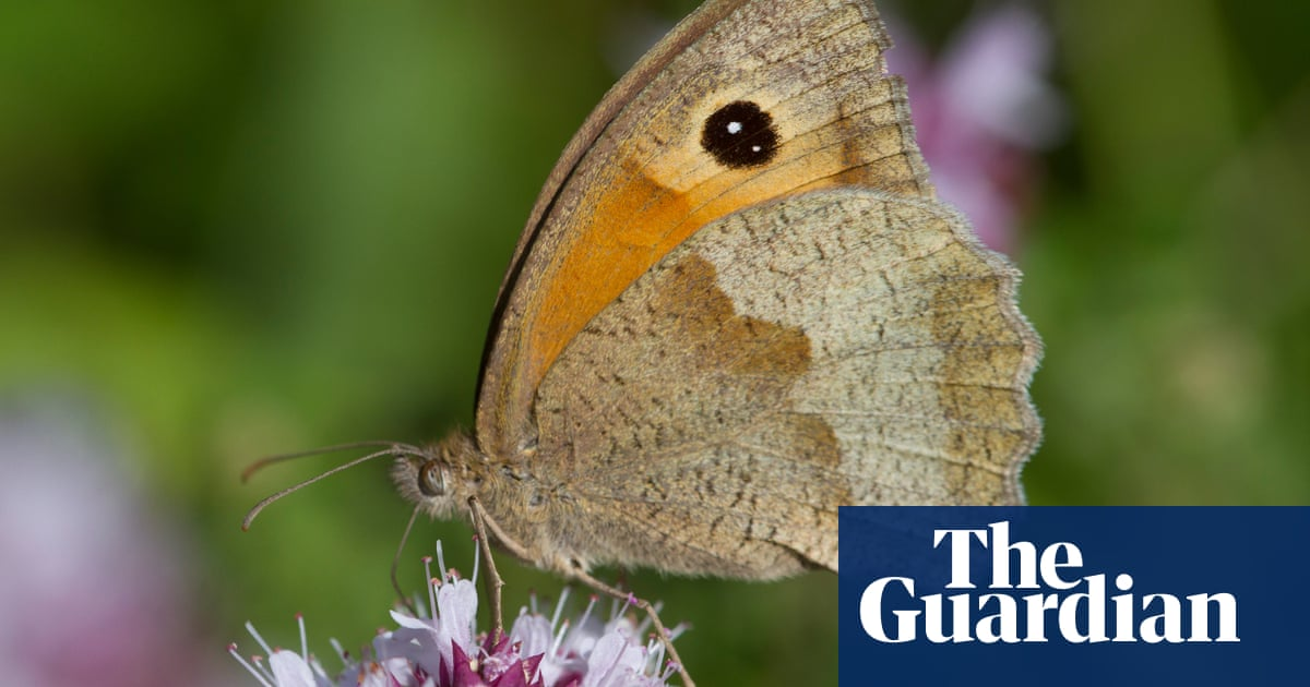 Wildlife Trusts raises £25m for projects to help UK nature recover