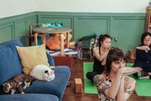 Brooklyn's Cat Cafe in New York