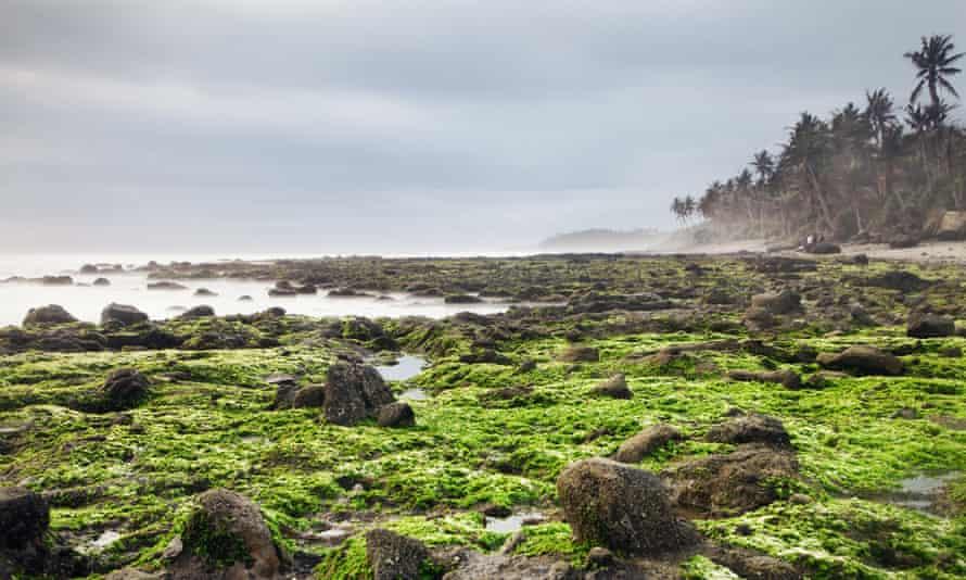 Algae carpet at the beach of Pantai Soka in Bali.