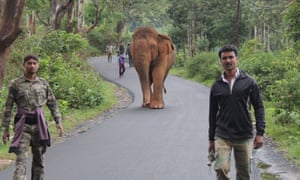 'CMK1' and his escort on a road in India's Gudalur region.