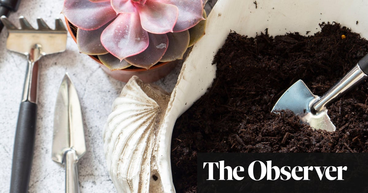 A growing concern: peat is bad for the planet – and for plants
