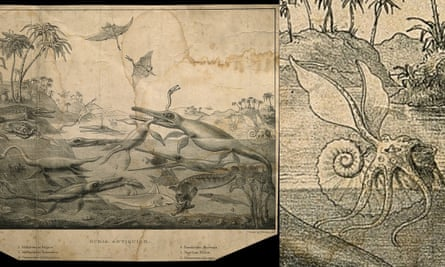 Widely reproduced and copied image Duria Antiquior: Animals and Land Plants of Dorset in the Liassic Period this version by Henry Thomas De la Bèche. Enlarged ammonite on the right. Image modified by the author- cropped and enlarged section to show detail.