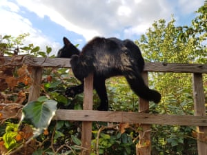 'Our 14-month old cat Mia struggling to stay on top of a wobbly fence - we had to rescue her in the end...'