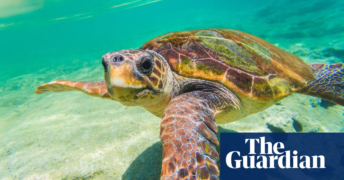 Pandemic gives respite to Greek island sea turtles – but returning tourists could wreck it