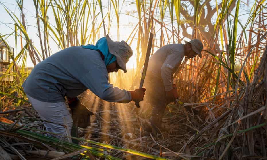 Sugar cane cutters work in the fields in Chichigalpa, Nicaragua