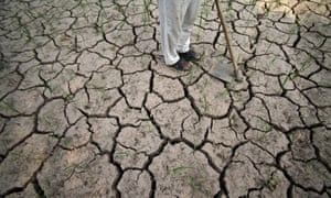 An Indian farmer stands on a parched paddy field in Ranbir Singh Pura, near Jammu, India.