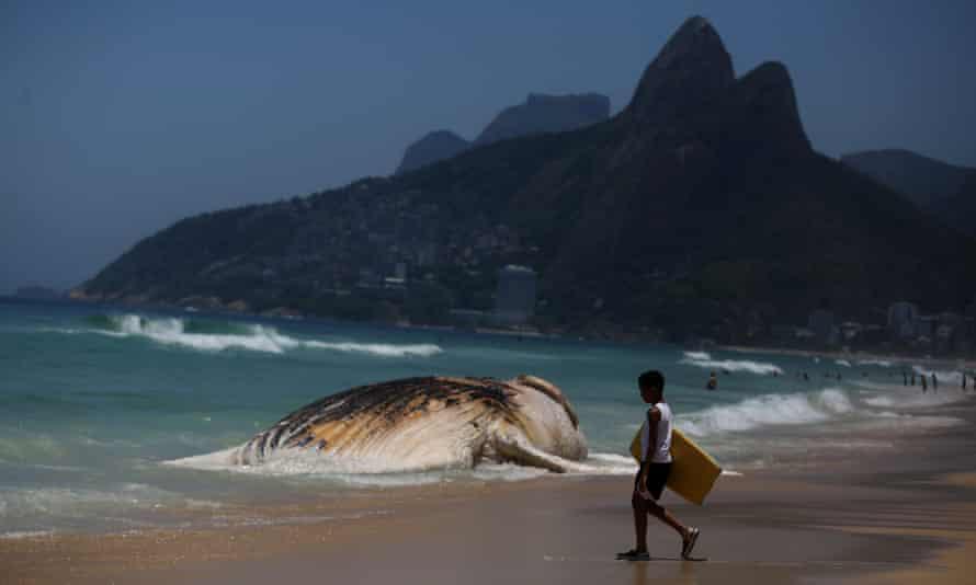 A dead whale on the shore of Ipanema beach in Rio de Janeiro, Brazil