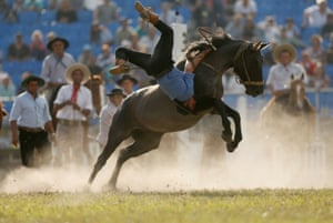 A gaucho is unseated by an untamed horse during Creole week celebrations