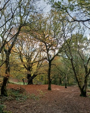 Anthony Cheetham's beech, where he proposed.