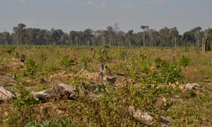 Cambodia's rainforest