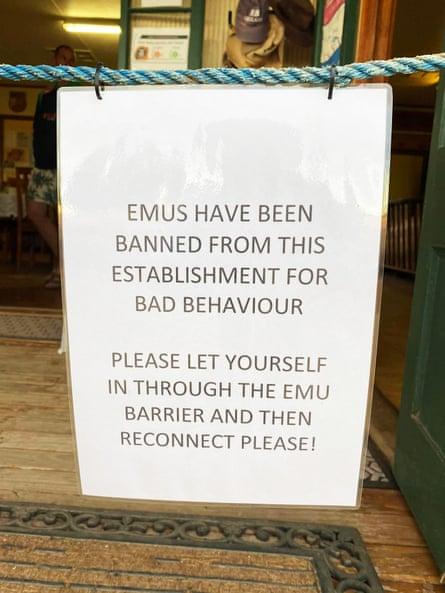 Blacklisted: misbehaving emus.