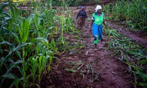 A field of maize devastated by Cyclone Idai, near Ngangu, in Chimanimani