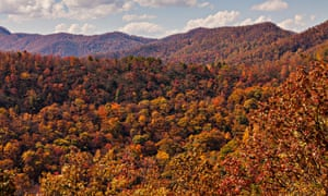 Nature's puzzle: autumn foliage along the Blue Ridge National Park near Asheville, North Carolina.