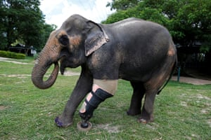Motola was injured by a mine while being used by loggers on the border in 1999