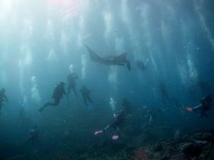 A manta ray among divers off Nusa Penida