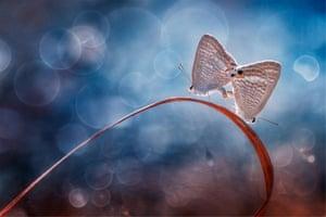 Special selection: Double Butterflies By Jia Ning Jian