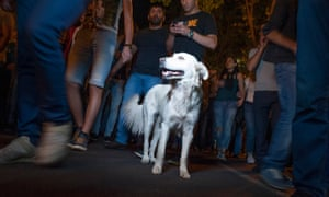 A white dog which has become one of the symbols of the pro-opposition movement. It's the fourth consecutive summer that Armenia has been racked by protests. Last year's uprising against utility price hikes became known as 'Electric Yerevan' and saw three couples get married on the streets
