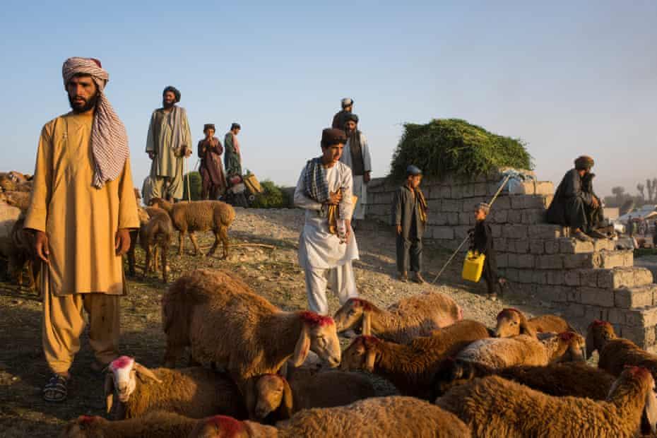 Farmers and buyers amid flocks of sheep and goats and temporary tea houses at the Friday livestock bazaar in Helmand's provincial capital, Lashkar Gah