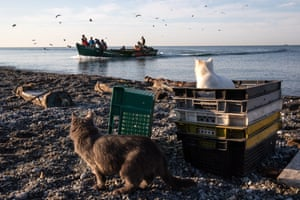 Sochi, RussiaCats wait by the Black Sea as fishermen arrive with their catch