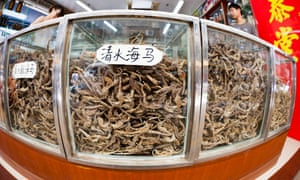 Glass cases full of dried seahorses for sale at a medicine shop in Guangzhou, China.
