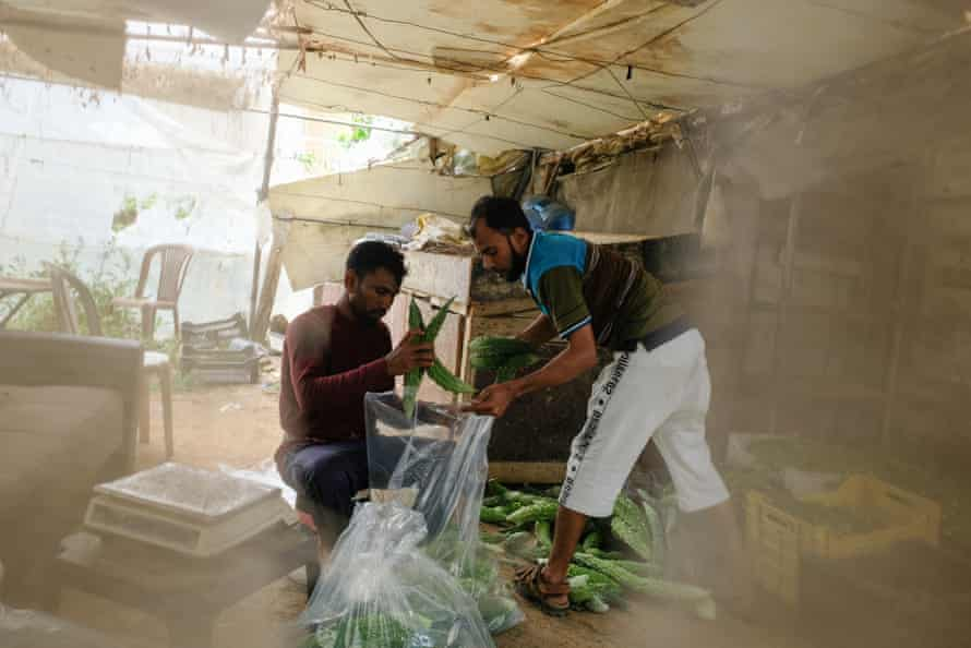 Kamal Mia and Srisu Basha packing vegetables