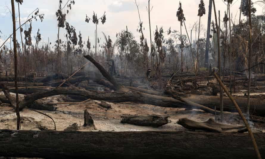 Here, a burnt area of the Amazon is seen during an operation to combat illegal logging.