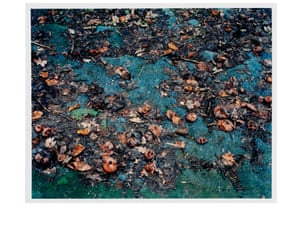 Mark Edwards, Rotting Apples from the series What Has Been Gathered Will Disperse, 2004