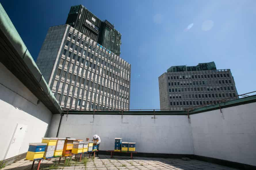 Urban beekeeper Franc Petrovcic inspects beehives on the rooftop of the Cankarjev dom cultural and congress center in Ljubljana, Slovenia, on July 6, 2017. In 2008, these were the first rooftop beehives in Ljubljana.
