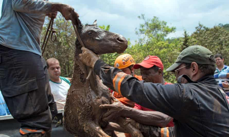 Brazilian firemen rescue a foal which was trapped in the mud after the dam bursts.