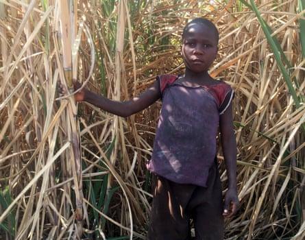 Tapiwa Mumverenge*, in a sugarcane plantation
