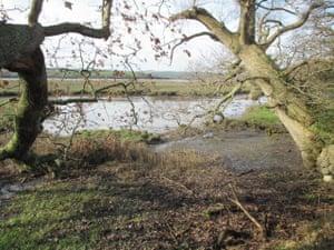 River margins and mud banks at Bere Ferrers