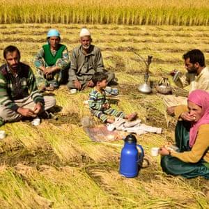 A family takes a harvest time tea break in a field in Kashmir.