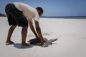 Fikiri Kiponda releases a green turtle, which was unintentionally caught in a fisherman's net, back into the Watamu national marine park on the Indian Ocean coast of Kenya.