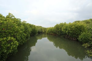 Waterways surrounded by rich mangrove belts in Vidathaltheevu, Mannar district