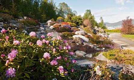 Rhododendron valley, in the Arctic Alpine botanic garden in Tromso, Norway.