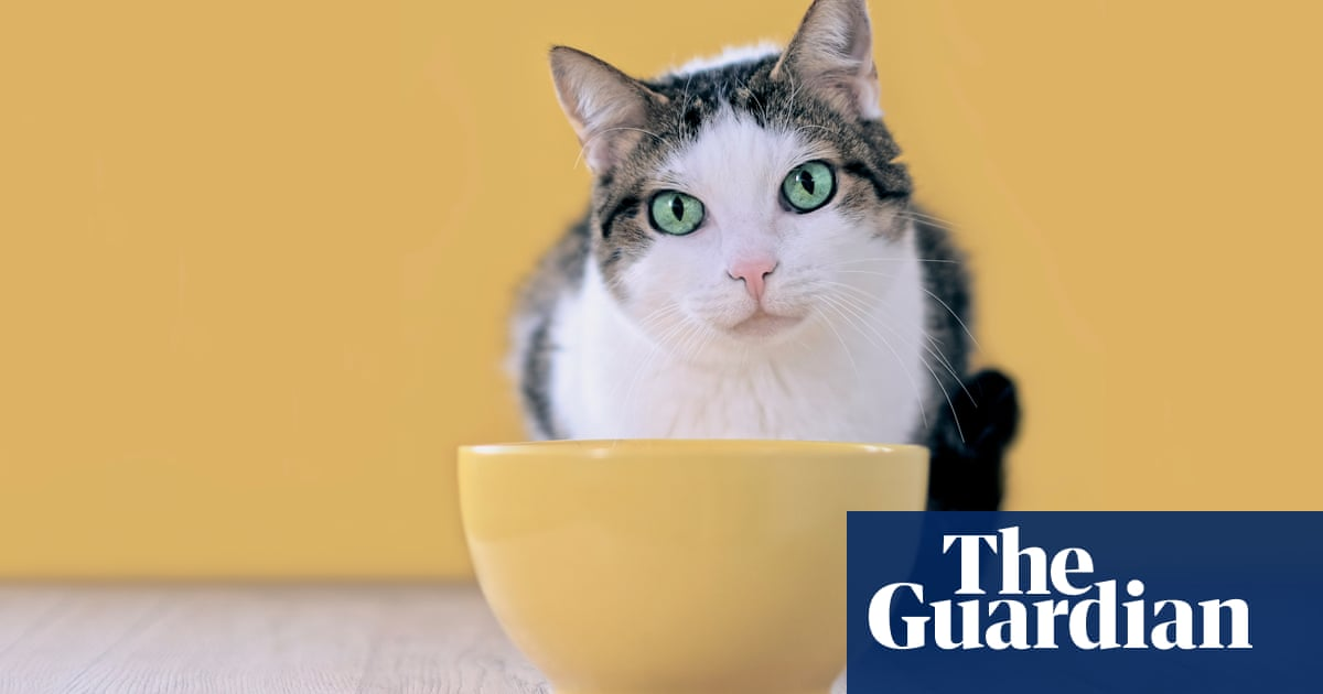Tim Dowling: the pet food system is broken, and the cat blames me