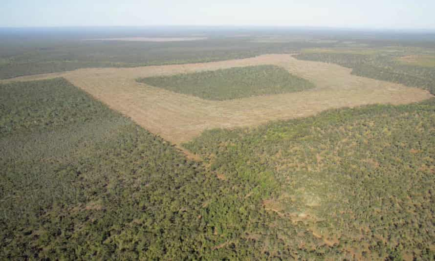 A recently re-legalised broadscale clearing in Cape York, Queensland.