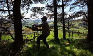 A forest worker near Innerleithen in the Scottish Borders.