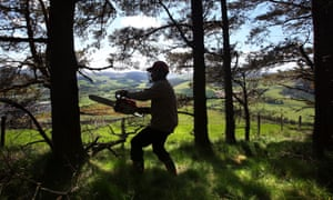 Tree felling for fuel in Scotland