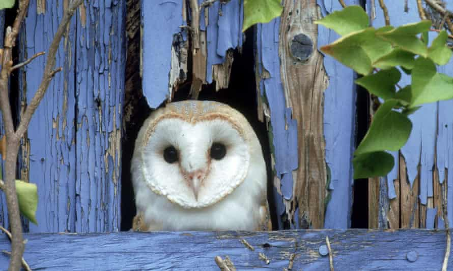 The 'concentricity' of an owl's face …